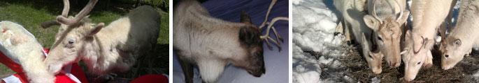bandeau-renne